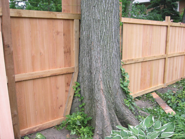 C-0703-T - Cedar Fence with Tree Baffle
